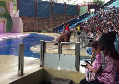 Sea Lions vs Pirates at Chimelong Ocean Kingdom in Hengqin, Zhuhai, China